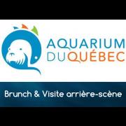Brunch Visite de l'arrière-scène de l'Aquarium du Québec (26 janvier 2020)
