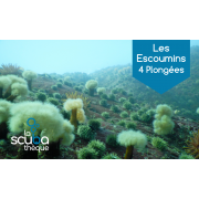 Les Escoumins  4 plongées - Prochaine date 5-6 septembre 2020
