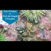 Parc Forillon et Pont de Gaspé - Prochaine date 10 juillet 2020