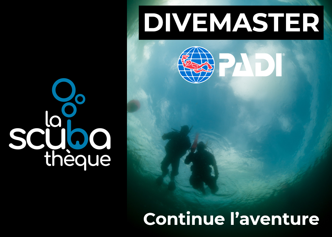Divemaster PADI  Niveau Professionnel - Prochaine date 15 juin 2021