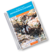 Plongée en apnée - Identification de la vie marine - Caraïbes